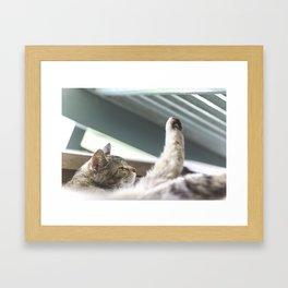 Kitty Companion Framed Art Print