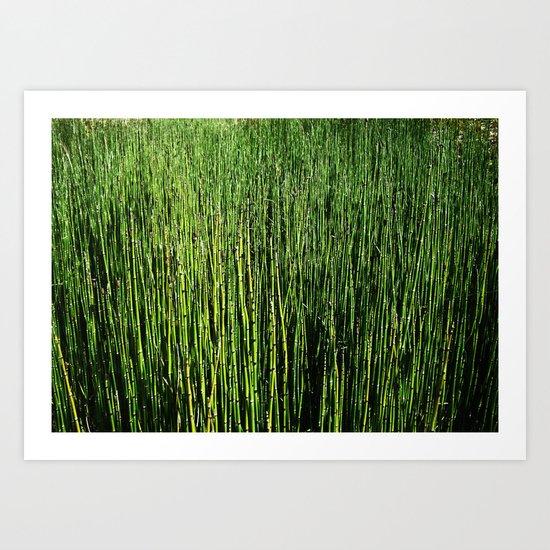 Wallgrass Art Print