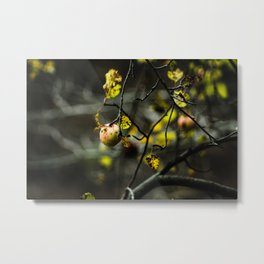 The forbidden fruit Metal Print