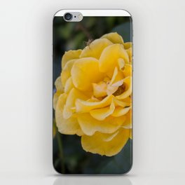 Rose Garden Six (with bonus friend) iPhone Skin