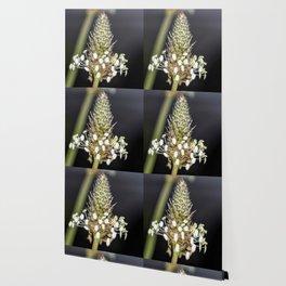 Buckhorn flower top close up Wallpaper