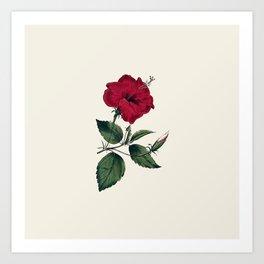 Vintage ivory white red green botanical flower Art Print