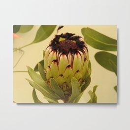 Protea Green Metal Print