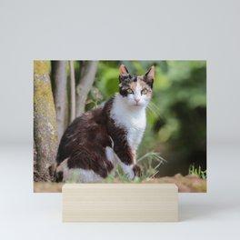 Are you meowing to me? Mini Art Print