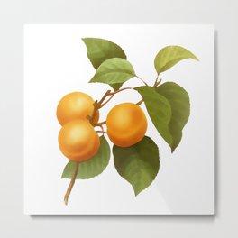 Apricot Metal Print