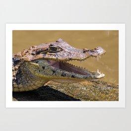 Smiling crocodile in Tortuguero Art Print