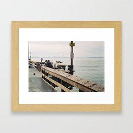 Seaguls Framed Art Print