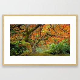 Japanese Maple Framed Art Print