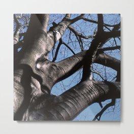 maple tree in winter Metal Print