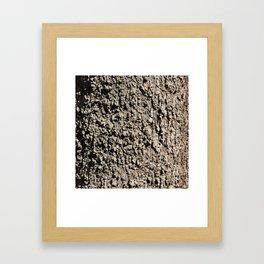TEXTURES -- Western Sycamore Bark Framed Art Print
