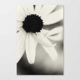Black Eyed Susan in Black and White Canvas Print