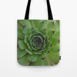 Houseleek (Sempervivum) Photo with purple tips viewed from the top dow Tote Bag