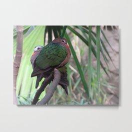 Green-Winged Dove Metal Print