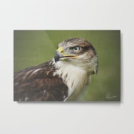 Red-tailed Hawk II Metal Print