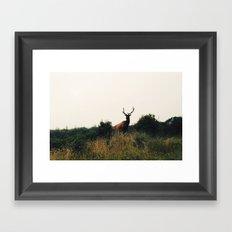 Prairie Creek Elk Framed Art Print