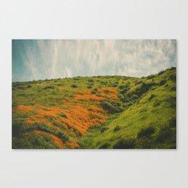 California Poppies 019 Canvas Print