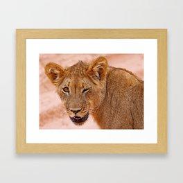 Winking lion - Africa wildlife Framed Art Print