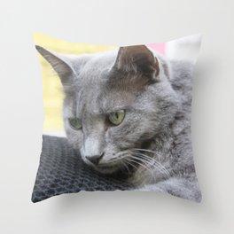 Gorgeous Grey Cat Photo Portrait Throw Pillow