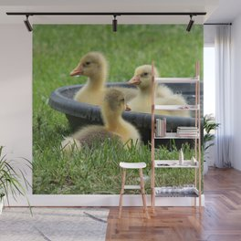 Three little goslings wildlife in the morning while drinking in the meadow in sepia Wall Mural