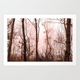 Foggy morning in the forest Art Print