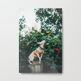 Autumn sphinx Metal Print