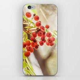 Rowan berries iPhone Skin
