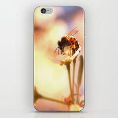Honey herder iPhone & iPod Skin