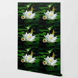 White Water Lily and Bud in Pond Wallpaper
