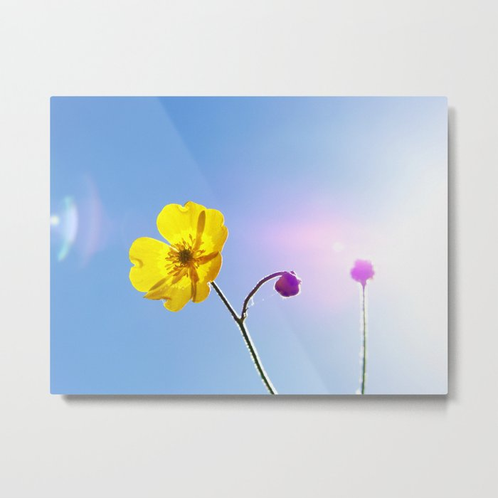 Buttercup Flare Metal Print