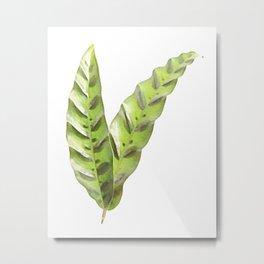 Calathea lancifolia 02 Metal Print