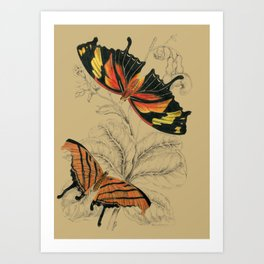 Scientific Antique Butterflies Entomology Drawing Art Print