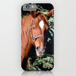 Miss Sadie - A horse, of course iPhone Case
