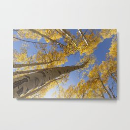 Aspen Colorado Looking Up Metal Print