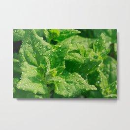 Spinach leaves Metal Print