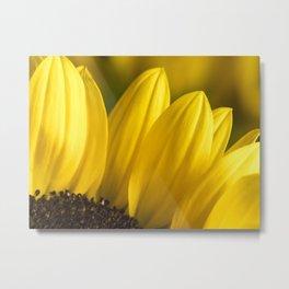 Brown Disk Sunflower Macro 2 Metal Print