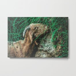 Iberic Goat eating some natural green Metal Print