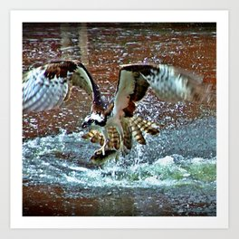 Osprey With Alwive Art Print