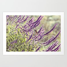 hummingbird + flowers Art Print