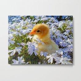 Baby Chick Metal Print