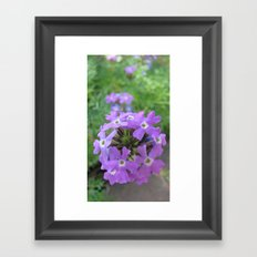 INDIA - Purple Flowers 2 Framed Art Print