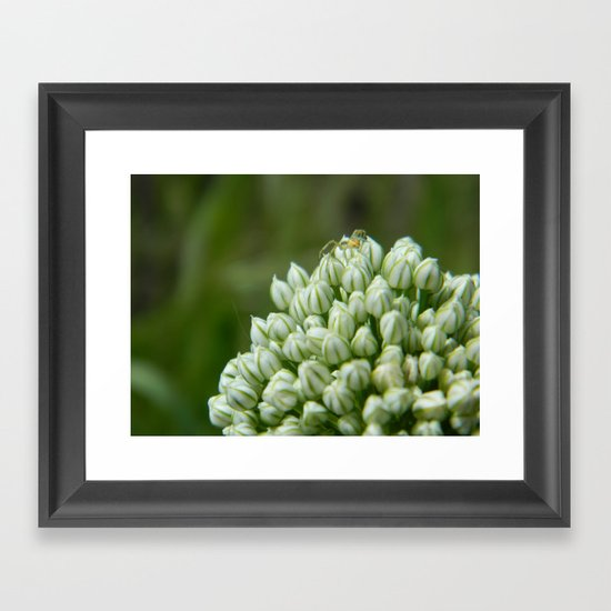 Spider Chive Flower Framed Art Print