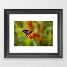 Monarch Butterfly #2 Framed Art Print