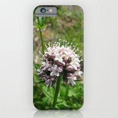 USA - ALASKA - Purple Flowers iPhone 6s Slim Case