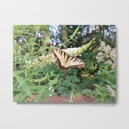 Nature's Yellow Butterfly Metal Print