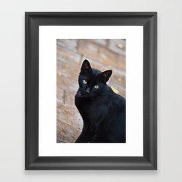 Black Cat - Monda, Spain Framed Art Print