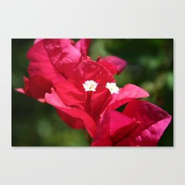 Sanibel Flower Canvas Print