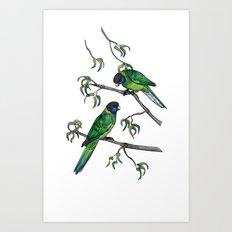 Ringneck Parrots Art Print