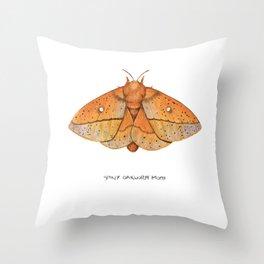 Spiny Oakworm Moth (Anisota stigma) Throw Pillow