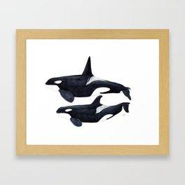 Orca male and female Framed Art Print