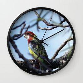 Rosella Parrot Wall Clock